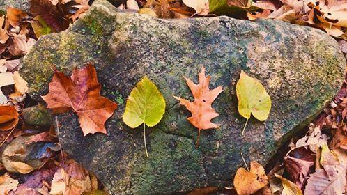 leavesme